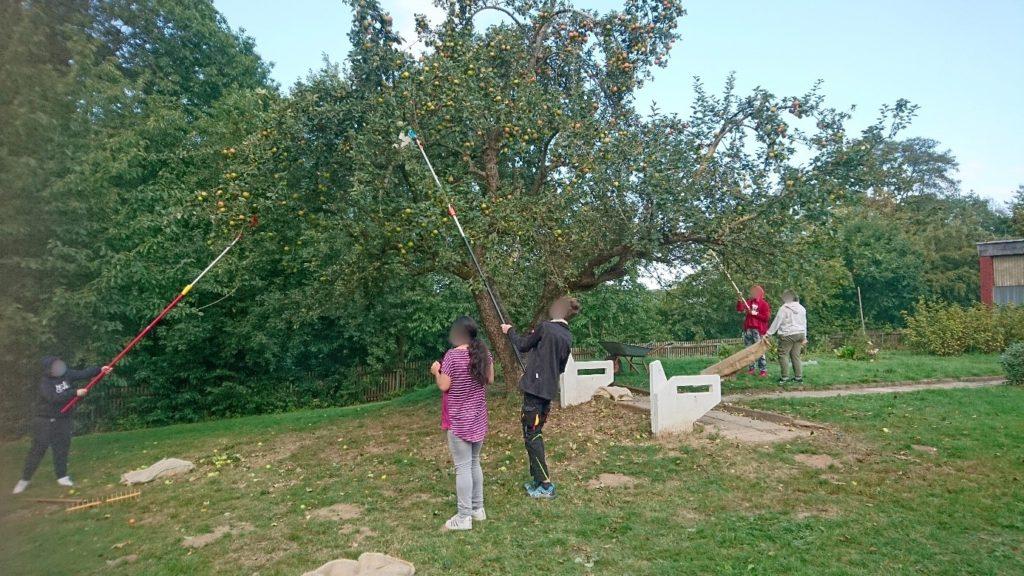 Apfelbaumprojekt der Klasse BO7